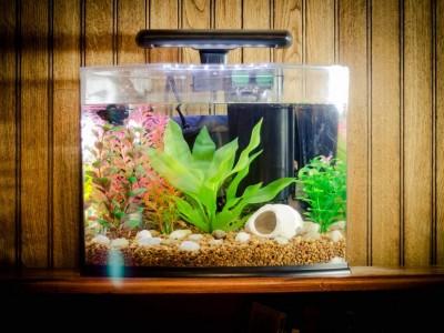 Ghid de amenajare al unui acvariu